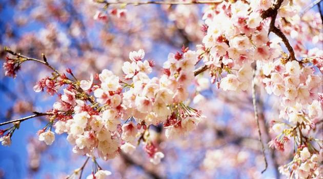 Springtime Spankings Remembered